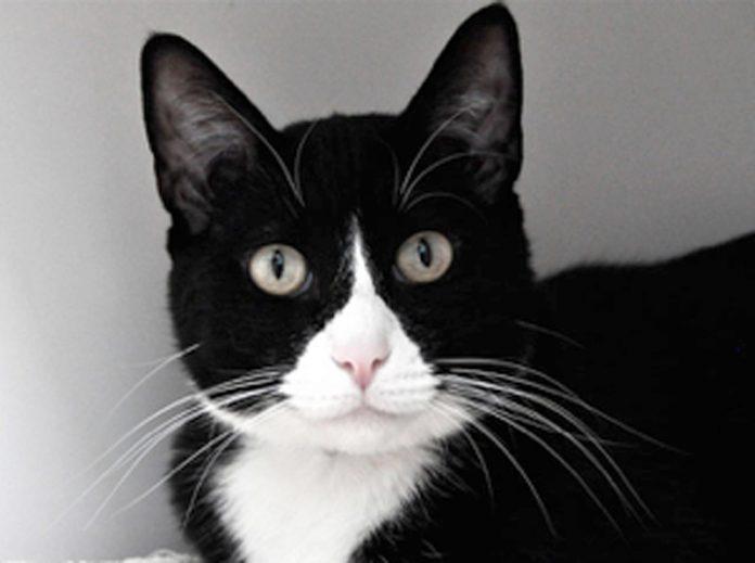 CAT onlline.jpg